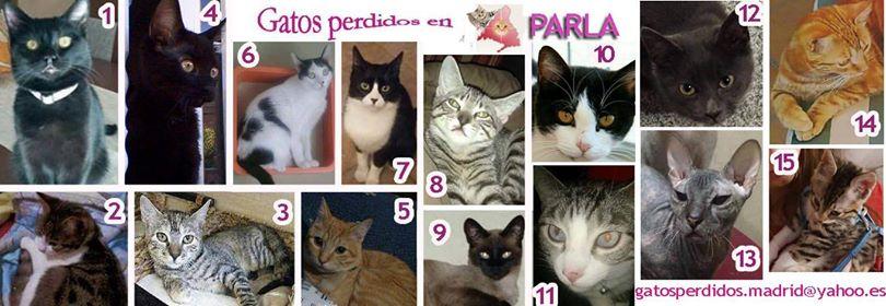 Parla: gatos perdidos