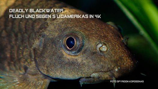 TV Produktion Abenteuer Amazonas: Deadly Blackwater