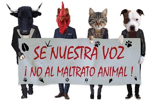 Maltrato Animal En La España Del Siglo XXI