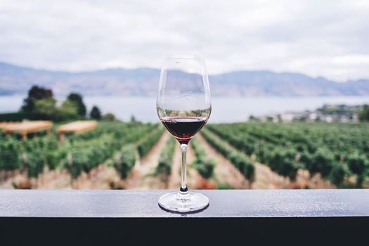 Plant-Based Wine Tour of Northern Italy (ladies only)