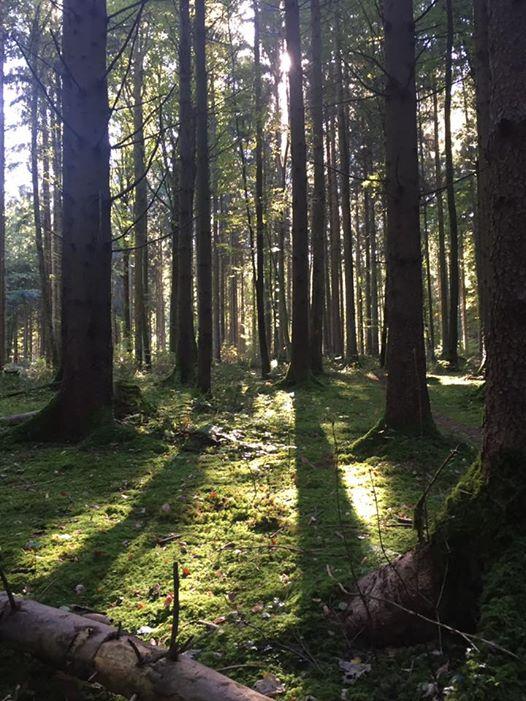 Malen im Wald