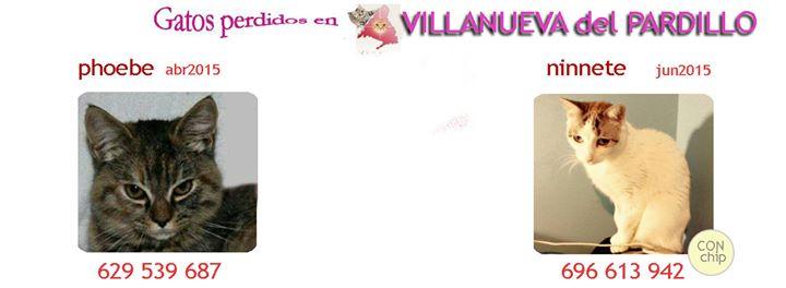 Villanueva del Pardillo: gatos Perdidos