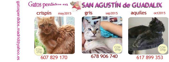 San Agustín de Guadalíx: gatos Perdidos