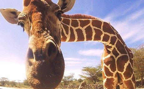 Voodoo-Afrika-Treff das Globetrotter Treffen in der Natur