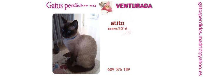 Venturada: gatos perdidos